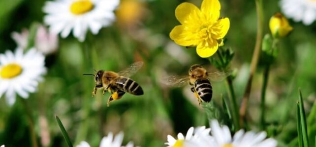 Алгоритм дій при підозрі отруєння бджіл пестицидами